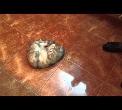 Este gato ADORA un buen bote de olivas