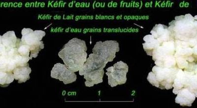 Le kéfir de fruits en détail