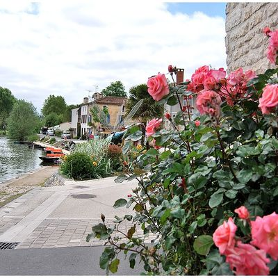 La rose de Coulon