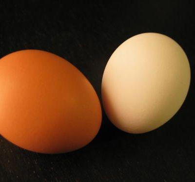 Pourquoi les œufs de poule sont-ils blancs au Japon?