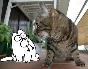 Simon's Cat ou le chat de Simon