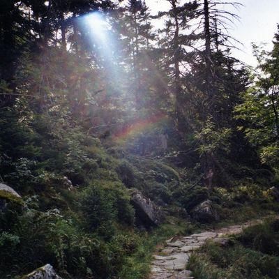 Regenbogen-Gedicht Goethe