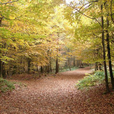 Balade dans les Vosges -Le col du Donon et ses vestiges Celtes.