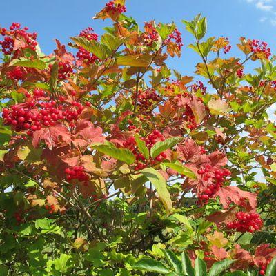 Un petit air d'automne