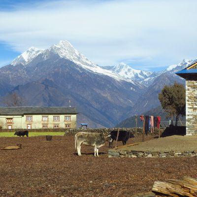 Article 19, Février 2013, Le village de Pangom