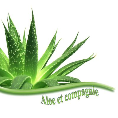 Aloe et compagnie