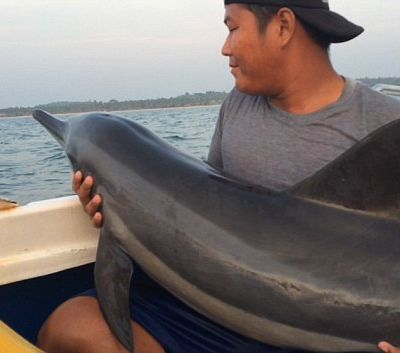 The battle to save a life of dolphin