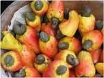 Little details on cashew nuts of Benin and west Africa in general