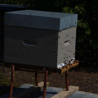 L'arrivée des abeilles