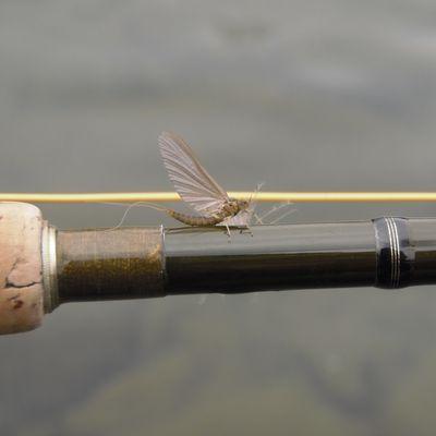 fly-fishing-pyrenees-09.overblog.com