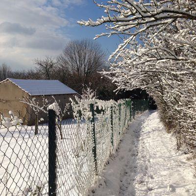 L'hiver dans notre verger-potager