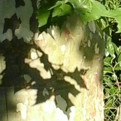 entre lumière et obscurité /  la couleur se perd /  et les feuilles en prennent ombrage /  (iovan.g)