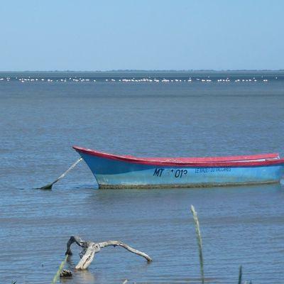 Les oiseaux de Camargue / Les Saintes Maries de la Mer (6)