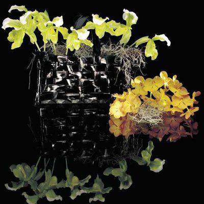 Basille fleurs, artisan fleuriste à Rouen