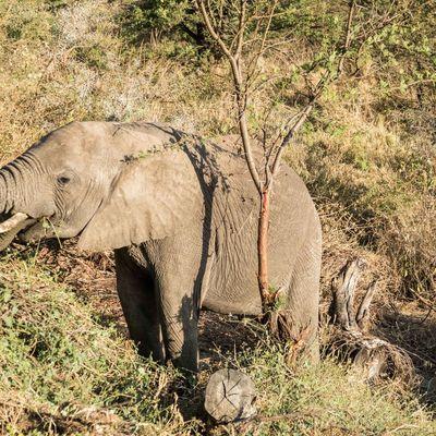 Tanzanie : du Serengeti au Ngorongoro !