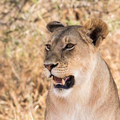 Tanzanie : les animaux vus lors des safaris !