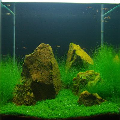 Aquascaping et Aquariophilie, Art et Passion