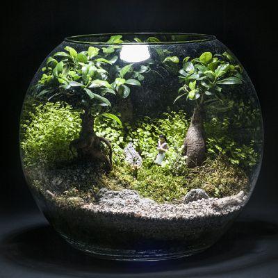 minéral et vegetal, micro-paysages créatifs et ludiques