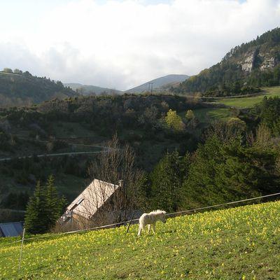 La vie aux Amayères...  contact nadine.noceti@orange.fr