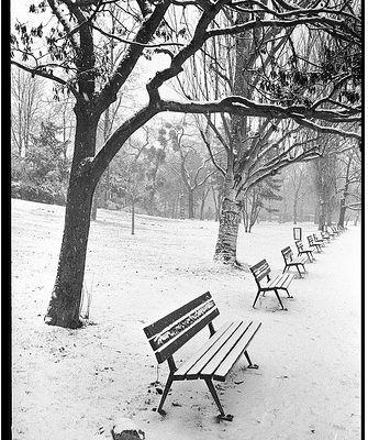 L'atelier d'écriture n°234 de Leiloona : Songe à l'amour fleurissant par un bel hiver...