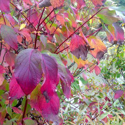 Mon jardin rouge Feng Shui