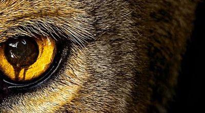 Zoo : du livre à la série