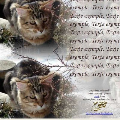 Maine Coon Incredimail & Papier A4 h l & outlook & enveloppe & 2 cartes A5 & signets 3 langues  chat_mainecoon_daisy_gedc0079_00
