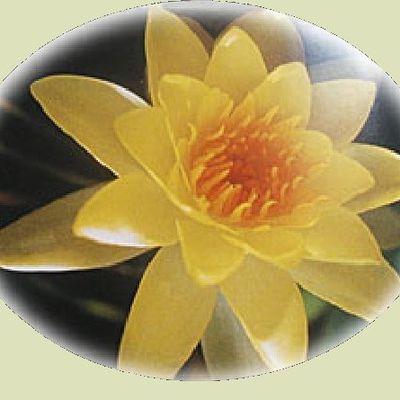 La Pluie du Dharma