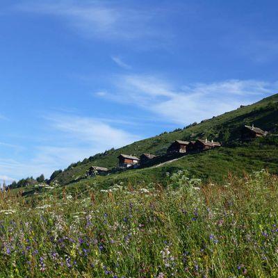 Sasseneire - 3254 m