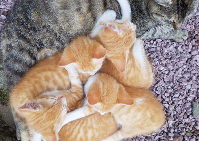 Mélo mélo de chatons