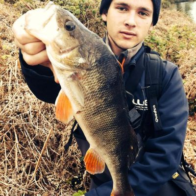 lunkerfish35