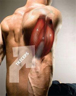Consigue unos brazos de acero con estos sencillos ejercicios