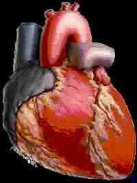 أسباب مرض القلب وسمومه الضارة