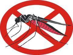 Comment lutter contre les moustiques
