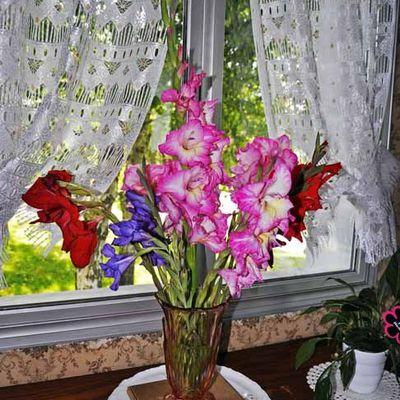Bouquet de glaïeuls
