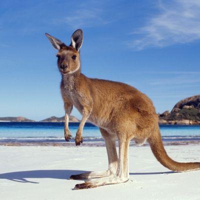 un Van Oost en Australie