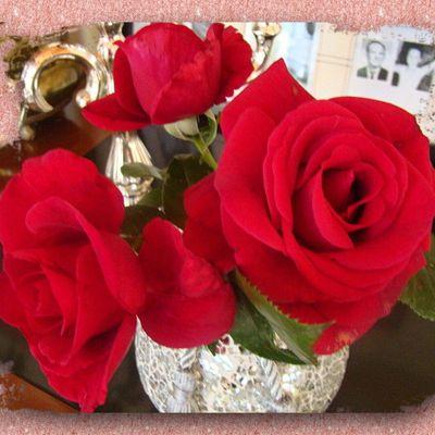 Dernières roses rouges de l'année