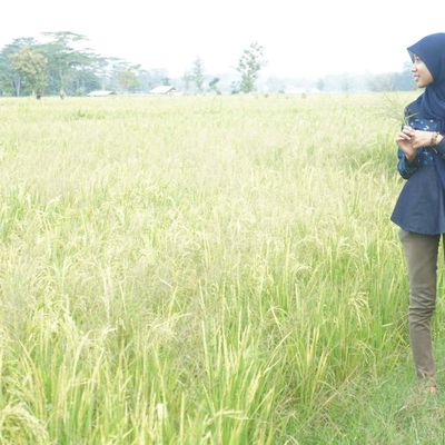 All About Penyihir Cantik