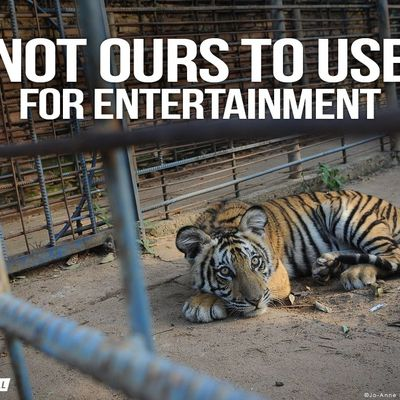 Using animals for entertainment