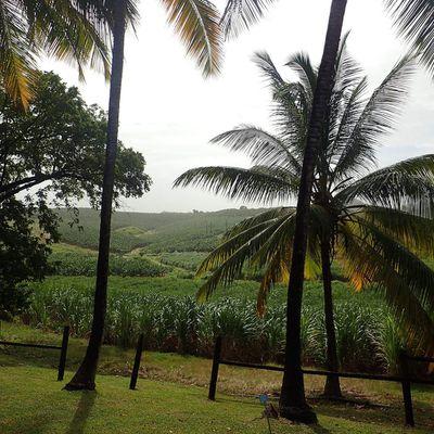 La Martinique :  par les enfants...