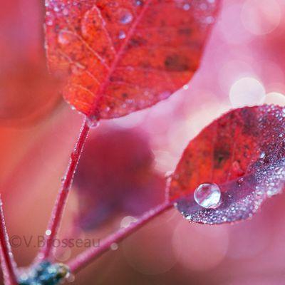 La perle d'automne ...