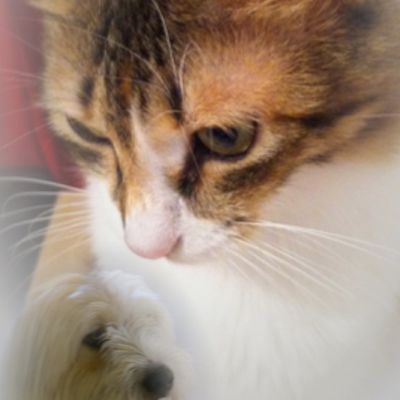 Montmartre, entre chien et chat