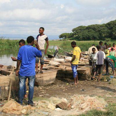 Le marché aux poissons d'Awassa (Ethiopie)
