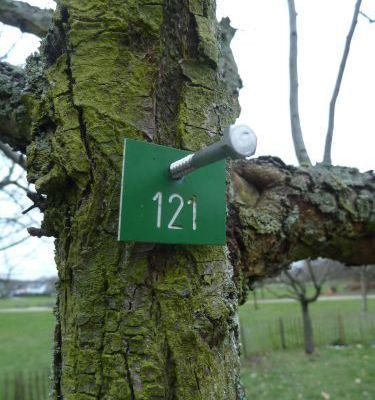 Bäume Zahlen