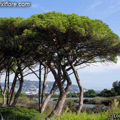 Reconnaître les arbres avec Pixiflore