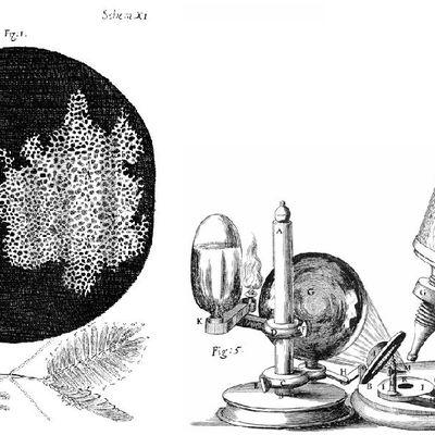Teoría celular. Introducción histórica.