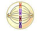 Funciones de la Célula - División Celular
