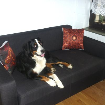 "Cushions ""Chestnut"" and ""Ancient Marble"" with dog ""Socke"""