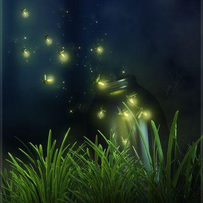 BlueFireFly, lumières dans l'ombre