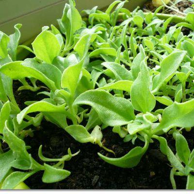 Quelques nouvelles des autres plantes